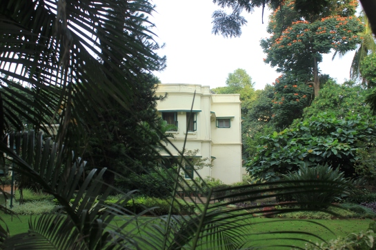 The greenery around the Madhavans' house