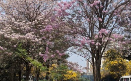 It's Blooming Time in theCity