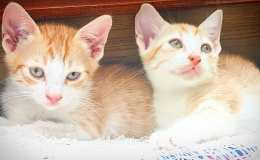 Cute kittens for adoption in Bangalore